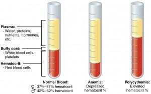 Morfologia krwi - laboratorium, cena