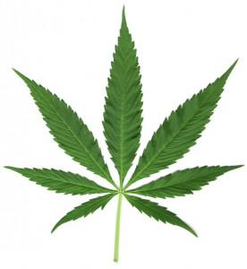 Lecznicza marihuana powinna być legalna