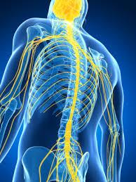 neurolog nowy sącz, specjalista neurologii, lekarz neurolog w nowym sączu, poradnia neurologiczna, choroby neurologiczne, układ nerwowy, choroby układu nerwowego