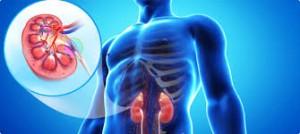 nefrolog nowy sącz, poradnia nefrologiczna, specjalista nefrolog, nefrologia