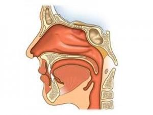 laryngolog kraków, otolaryngolog, specjalista laryngologii, poradnia laryngologiczna