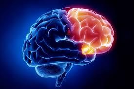 neurolog, specjalista z zakresu neurologii, choroby neurologiczne, neurolog gdynia, poradnia neurologiczna w gdyni