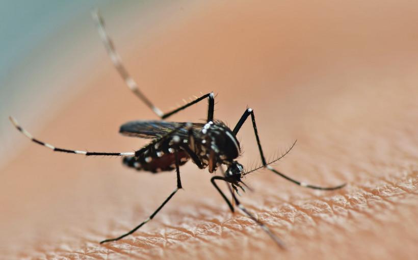 Wirus przenoszony przez komary może być alternatywą w leczeniu glejaka!