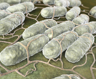 Salmonella - groźna szczególnie latem?!